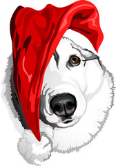head dog breed Siberian Husky in the bell of Santa Claus