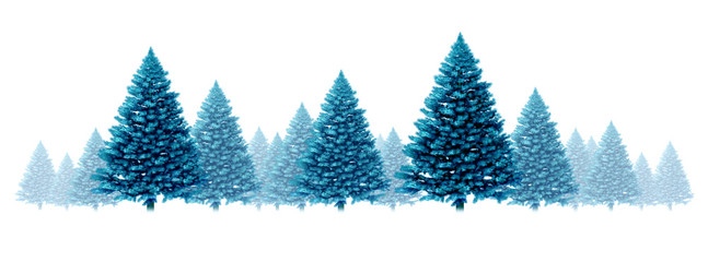 Winter Blue Pine Background