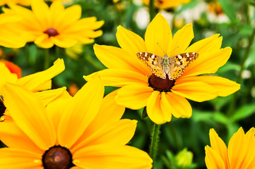 Papillon posé  sur fleur