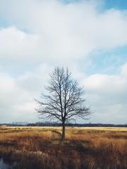 Kahler Baum im Moor