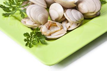 natural clam