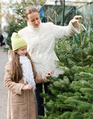 Family choosing Christmas tree at market