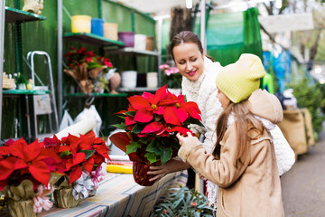 Woman with daughter looking at flowers of Euphorbia pulcherrima