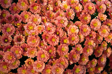 Riesen Große Blumenstrauß