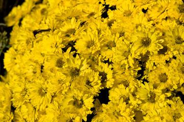 Gelbe Blumenstrauß