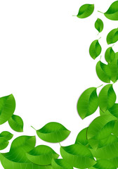 Eco leaves on white background. Vector image