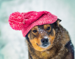 Dog wearing knee hat with pompom walking outdoor in winter