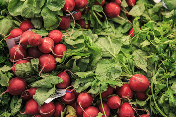 Red Radishes in a market