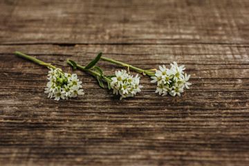 Полевые цветы на деревянном фоне