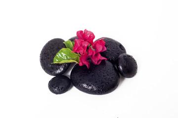 çiçek ve siyah taşlar