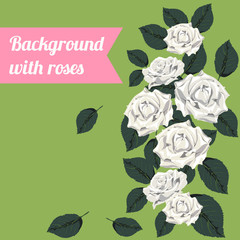 Colorful background with white roses