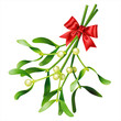 Mistletoe on white. Vector - 74750046