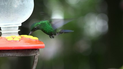 Hummingbirds, Birds, Animals, Wild Life, Nature