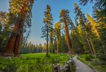 """Постер, картина, фотообои """"Sequoia national park, CA"""""""
