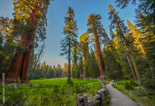 Sequoia national park, CA Photo by maislam