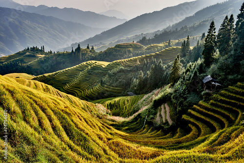 rice terraced fields Wengjia longji Longsheng Hunan China Plakat