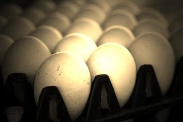White duck egg in the farm