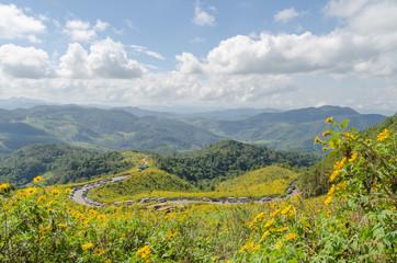 Mexican sunflower mountain in maehongson thailand