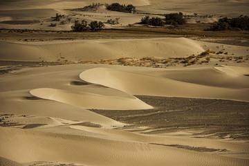 Sand Dune in Nubra Valley