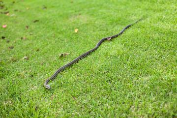 芝生とヘビ