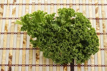 Grünkohl (Brassica oleracea var. sabellica L.)