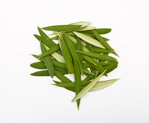 Leaves Composition, Olive Leaves