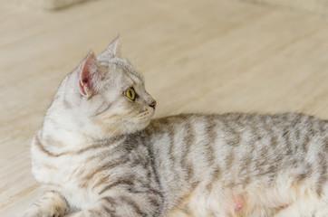 寝そべる母猫 振り向き