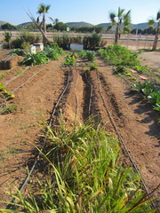 furrows with drip irrigation