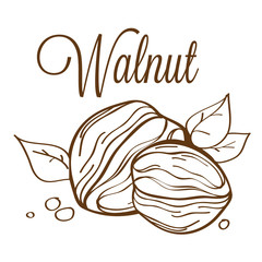 hand drawn vector walnut_01