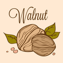 hand drawn vector walnut_02