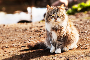Long haired wild cat sitting
