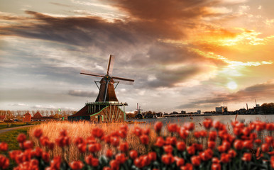 Dutch windmills with red tulips close the Amsterdam, Holland