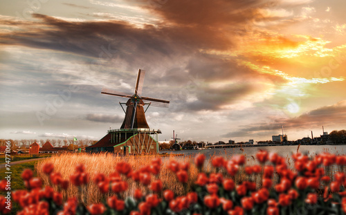 Canvas Amsterdam Dutch windmills with red tulips close the Amsterdam, Holland