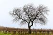 canvas print picture - Einsamer Baum im Winter