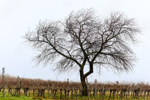 canvas print picture Einsamer Baum im Winter