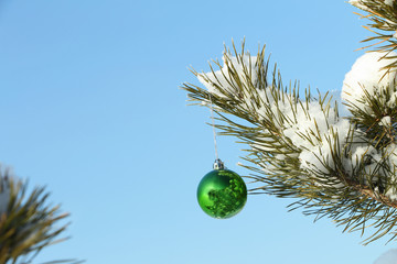 The  sphere hanging on a coniferous branch