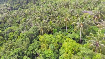 Aerial shot of the jungle