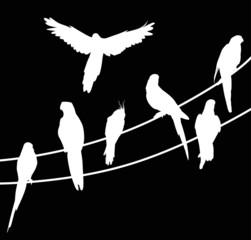 seven parrot white silhouettes