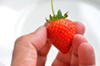 Man hand holds one Strawberry
