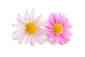 Zwei Margeritenblüten
