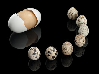 Seven quail eggs and one wooden egg