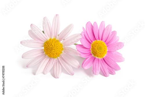 Foto op Canvas Madeliefjes Zwei Margeritenblüten