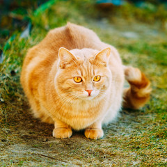 Red Cat Sitting On Green Spring Grass.