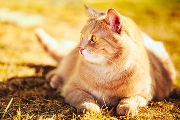 Red cat sitting on green spring grass