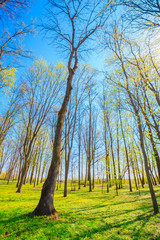 Spring Season In Park. Green Young Grass, Trees On Blue Sky Back