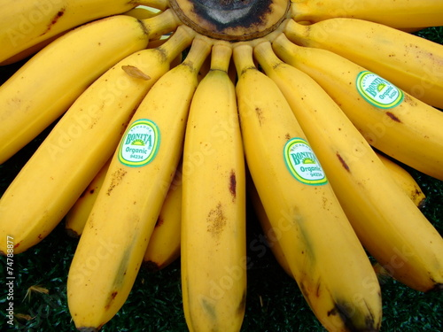 canvas print picture Bananen