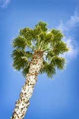 Palm and blue sky