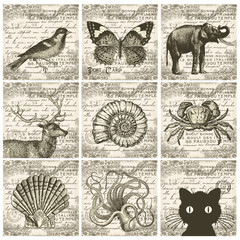 Animal collage collection