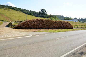 montaña de troncos de madera