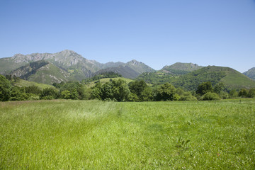 meadow and green mountains
